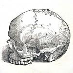 1543--Vesalio-03