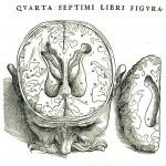 1543--Vesalio-16