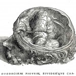 1543--Vesalio-25