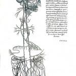1543--Vesalio-51