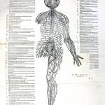 1543--Vesalio-56