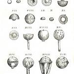 1543--Vesalio-61