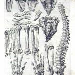 1560-VALVERDE-07