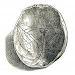 1543--Vesalio-07