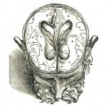 1543--Vesalio-17