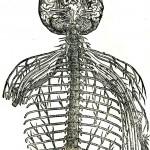 1543--Vesalio-57