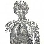 1543--Vesalio-58