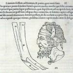 1544-VIDIUS-016