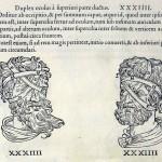 1544-VIDIUS-070