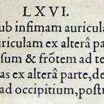 1544-VIDIUS-116