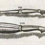 1665-Scultetus-04-copia-4
