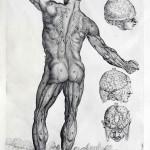 1741-Cortonesi-and-Petrioli-03