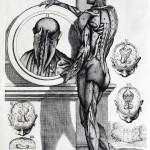 1741-Cortonesi-and-Petrioli-04