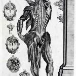 1741-Cortonesi-and-Petrioli-05