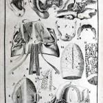 1756-Hallerus-15