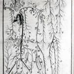 1756-Hallerus-23