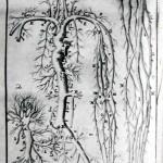 1756-Hallerus-24