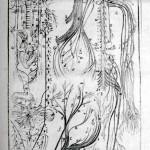1756-Hallerus-25