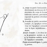 1875-Broca-23