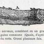 1882-Charlton-Bastian-06