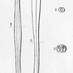 1882-Charlton-Bastian-18
