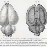 1882-Charlton-Bastian-21