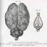 1882-Charlton-Bastian-25