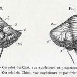 1882-Charlton-Bastian-27