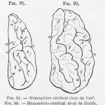 1882-Charlton-Bastian-34