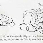 1882-Charlton-Bastian-35