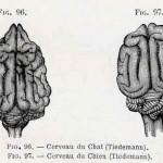 1882-Charlton-Bastian-37