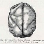 1882-Charlton-Bastian-42