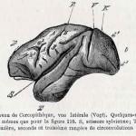 1882-Charlton-Bastian-44