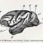 1882-Charlton-Bastian-46