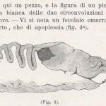 1894-Janni-Giuseppe-04