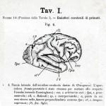 1895-Mingazzini-Giovanni-T1f4