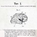 1895-Mingazzini-Giovanni-T1f7