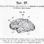 1895-Mingazzini-Giovanni-T4f14