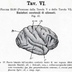1895-Mingazzini-Giovanni-T6f27