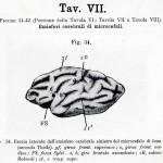 1895-Mingazzini-Giovanni-T7f34