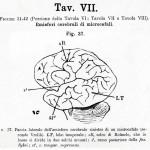1895-Mingazzini-Giovanni-T7f37