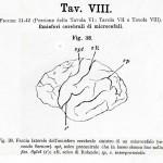 1895-Mingazzini-Giovanni-T8f38