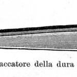 1904 MONOD 75