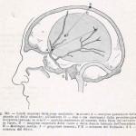 1908-Pat.-Chirurgica-03