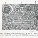 1908-Pat.-Chirurgica-27