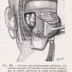 1908-Pat.-Chirurgica-28