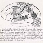 1908-Pat.-Chirurgica-31
