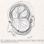 1908-Pat.-Chirurgica-32