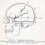 1908-Pat.-Chirurgica-50