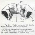 1914-Strumpell--014